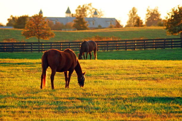 Late afternoon in horse country The sun sets on Horse Country in the Blue Grass Region of Kentucky ranch stock pictures, royalty-free photos & images
