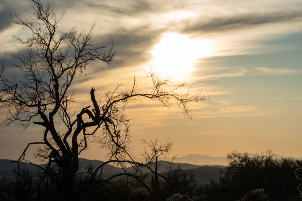 Late afternoon in the Sonoran Desert stock photo