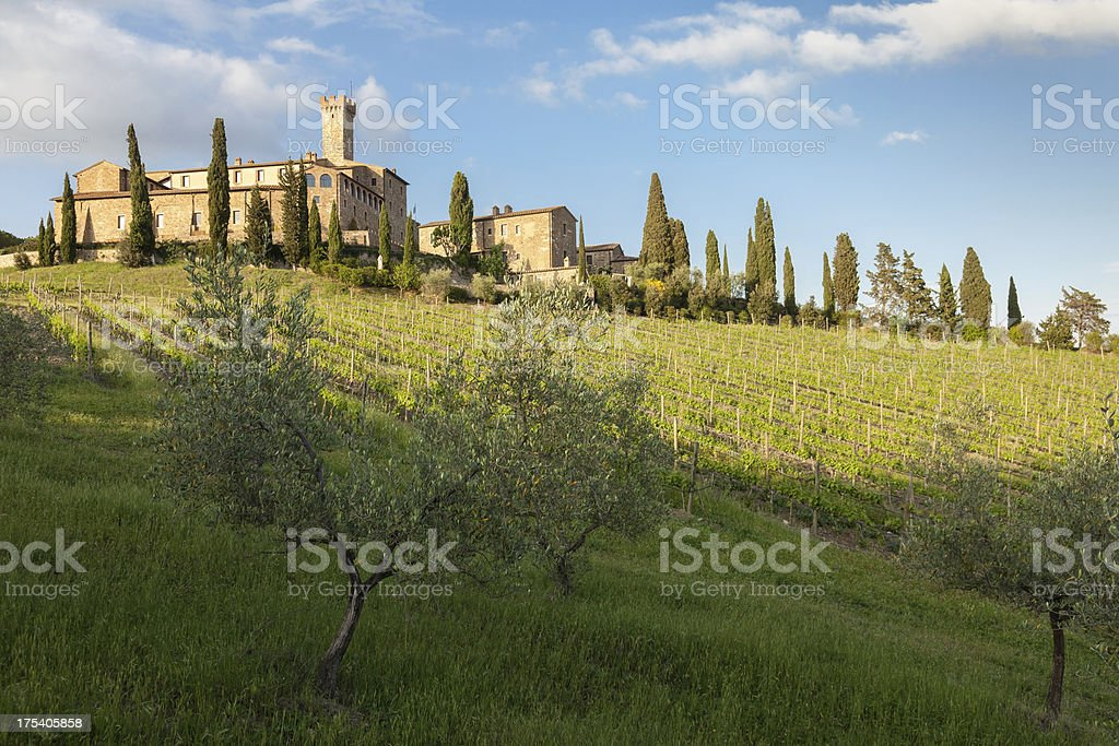 Late afternoon in the Tuscany vineyard stock photo