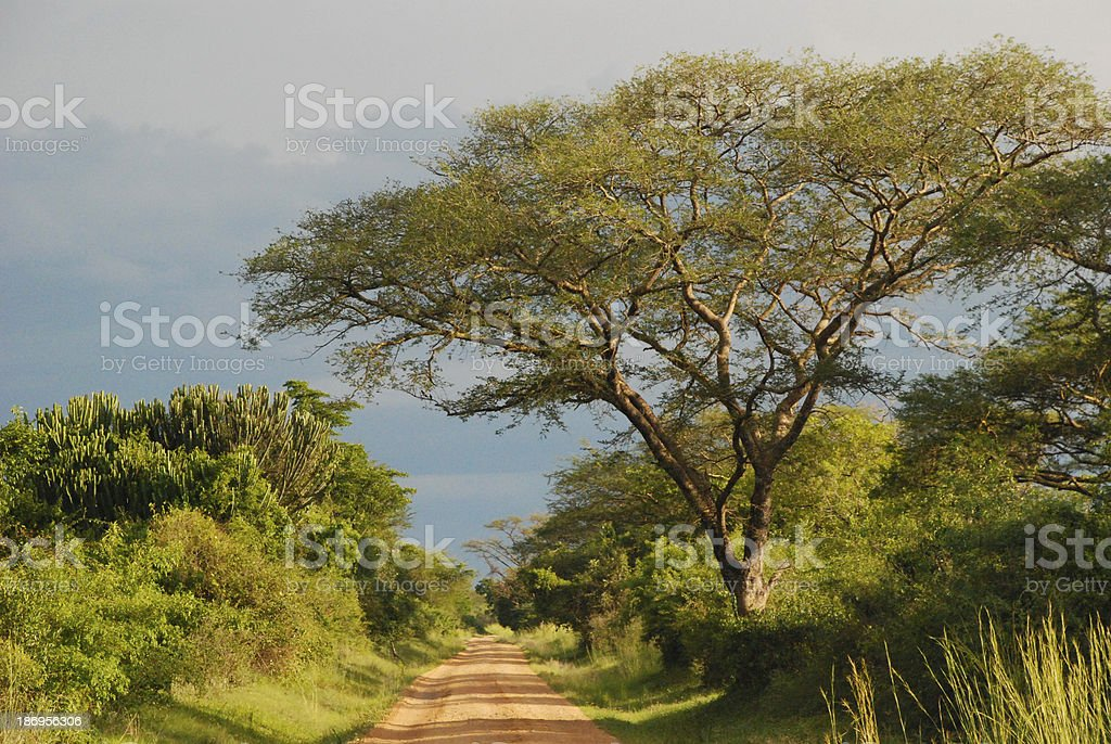 Late afternoon on the African savannah Uganda stock photo