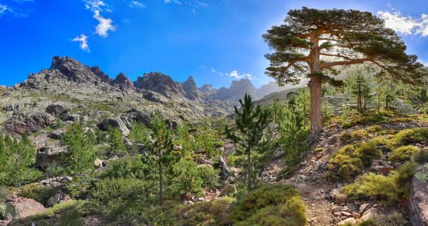 en fin d'après-midi sur le chemin de randonnée gr 20 près de asco (corse) - randonnée corse photos et images de collection