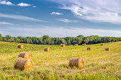 Sunlit bales of hay in rural Wisconsin in the American midwest.
