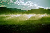 Late afternoon horizontal toned photo of Central California vegetable farm with irrigation