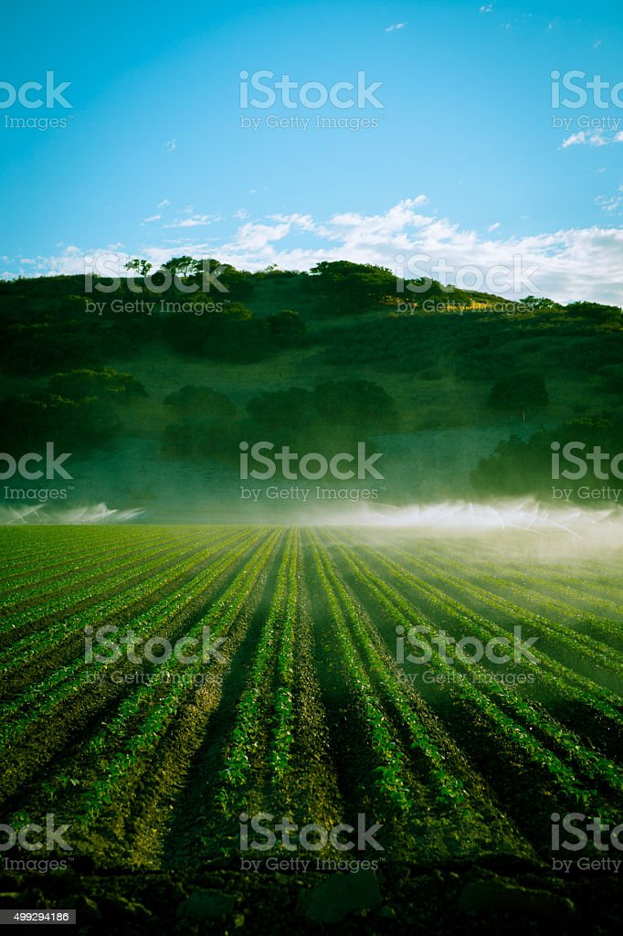 Late afternoon toned photo of California farm with irrigation stock photo