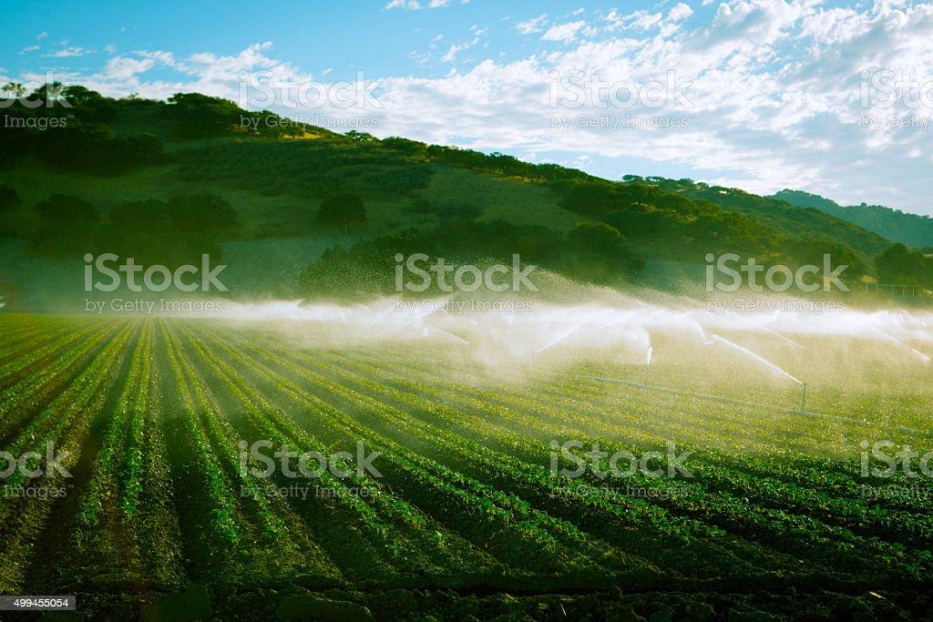 Tarde tonos foto de California farm con el riego - foto de stock