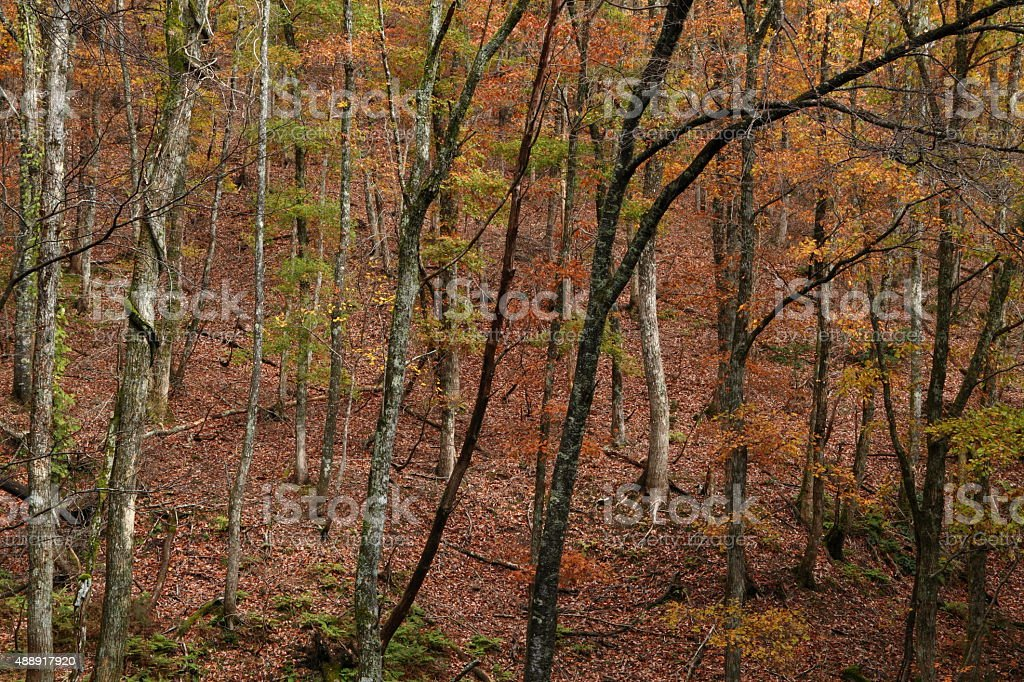 autumn coppice 延期 ストックフォト