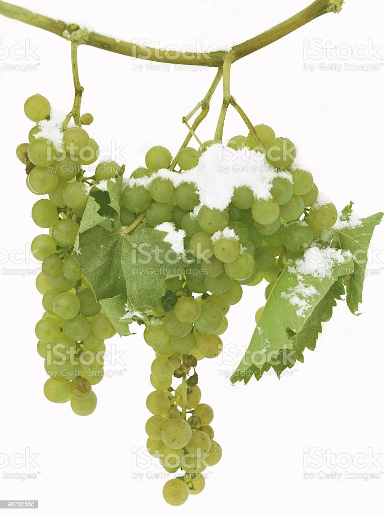 late harvest white grapes in winter royalty-free stock photo