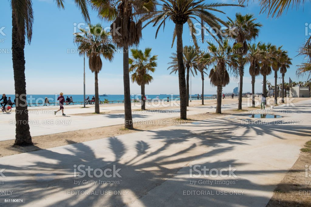 Late morning view on palm trees against a blue sky on the Passeig Maritim del Bogatell in Barcelona. stock photo