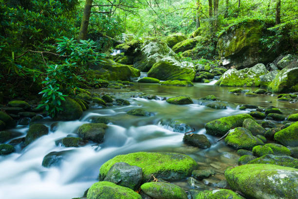 Late Spring, Roaring Fork Area, Great Smoky Mountains stock photo
