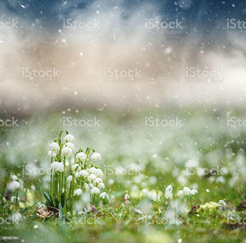 Late spring snow stock photo