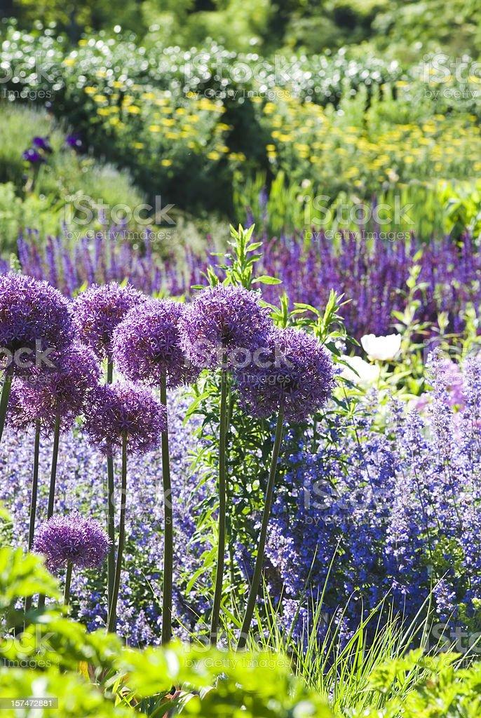 Late spring/early summer garden - IV stock photo