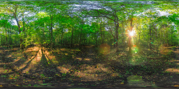 late summer afternoon in a park (360 degree HDRi panorama) 360 degrees spherical panoramic shot of green park in the summer afternoon high dynamic range imaging stock pictures, royalty-free photos & images