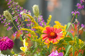 A variety of flowers in a late summer garden bed with the focus on the front red and yellow cornflower.
