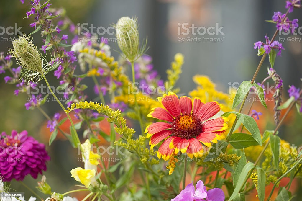 Late Summer Garden stock photo