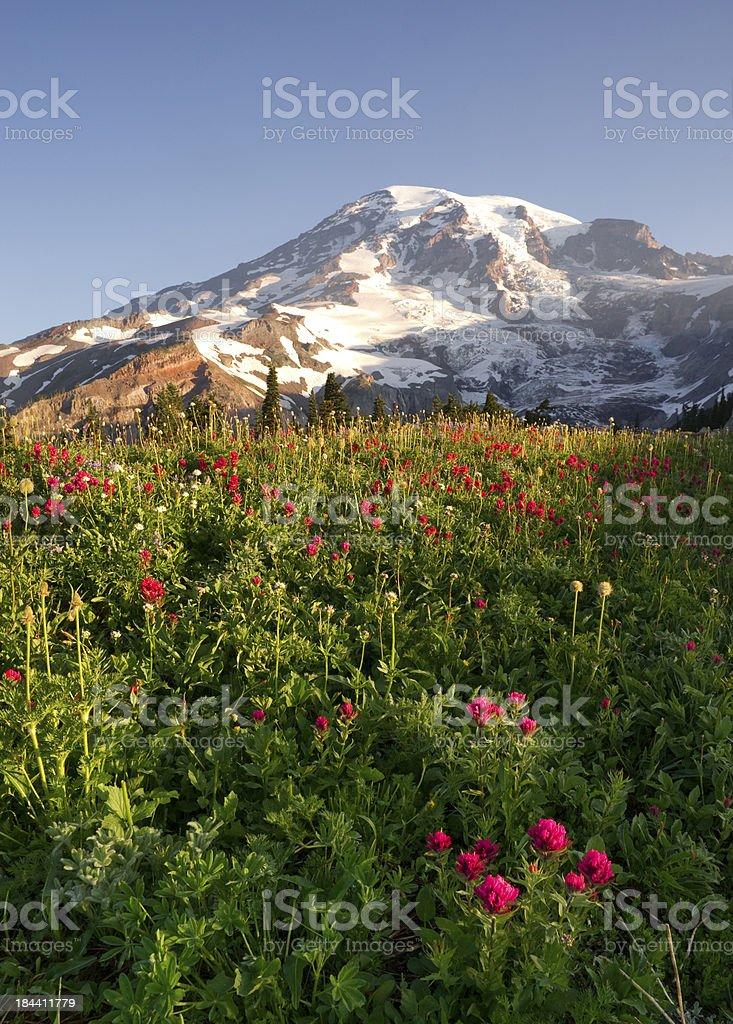 Late Summer Wildflowers Mt. Rainier National Park Skyline Trail stock photo