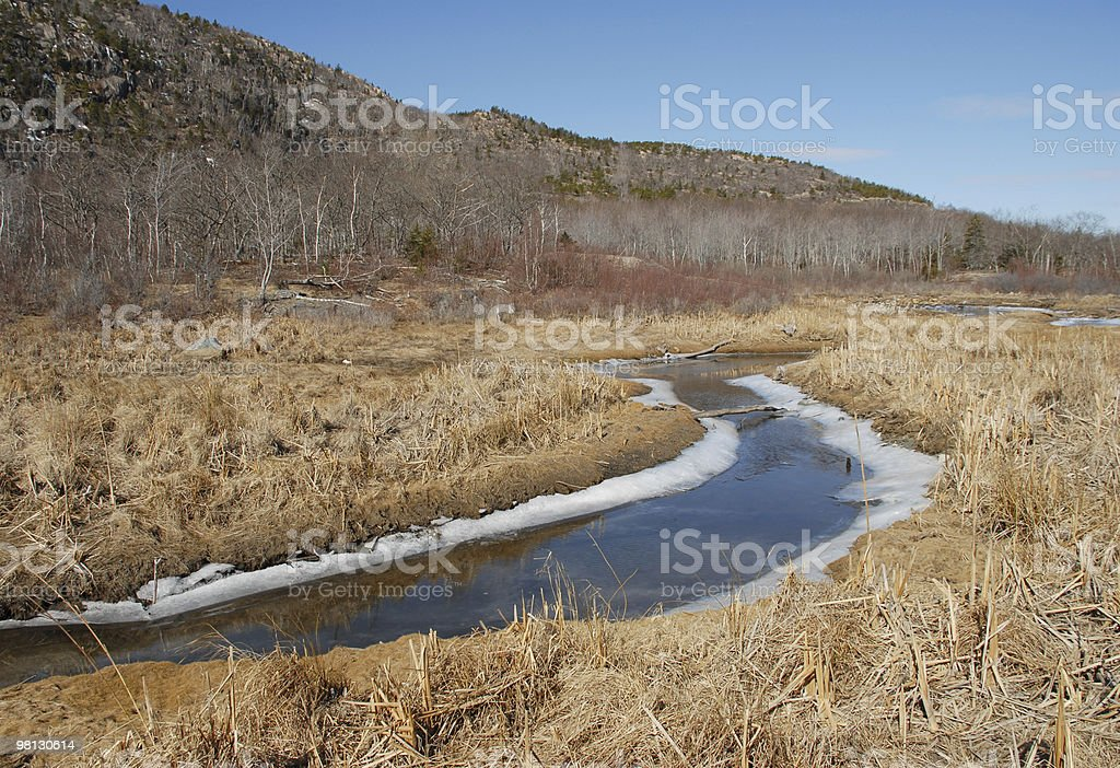 Late winter lingers along an icy Acadia stream royalty-free stock photo