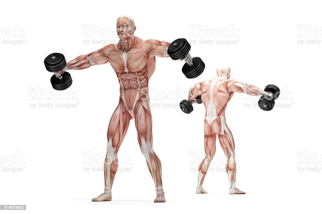 Lateral raises shoulders exercise. Anatomical illustration. Isolated. Clipping path stock photo