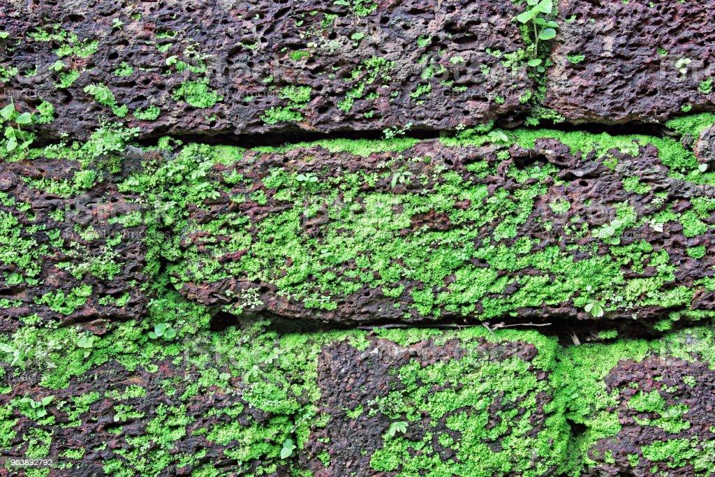 Laterite Stone Brick Wall Closeup - Royalty-free Algae Stock Photo