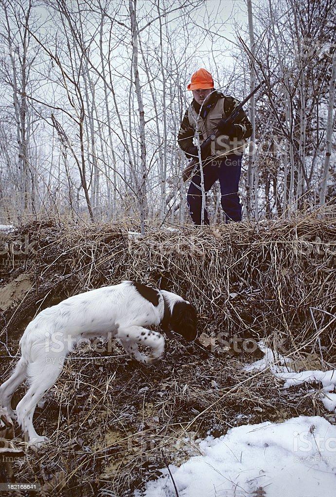 Late-season quail hunt royalty-free stock photo