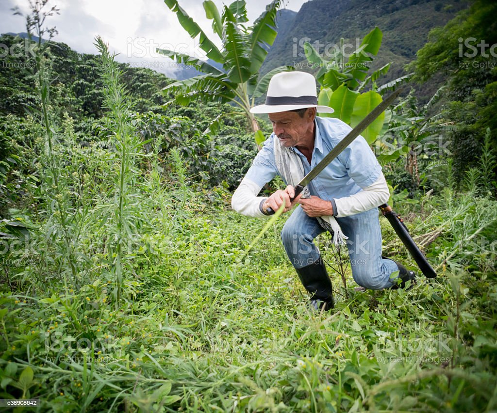 Latin American farmer working the land stock photo