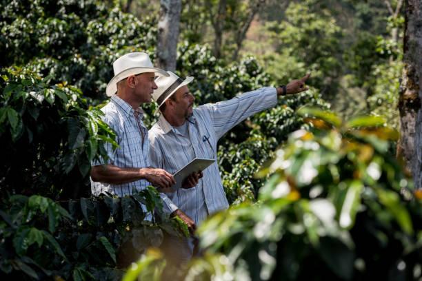 latin american men managing a coffee farm - coffee farmer foto e immagini stock