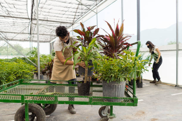 Latin employees with masks putting plants in wagon stock photo