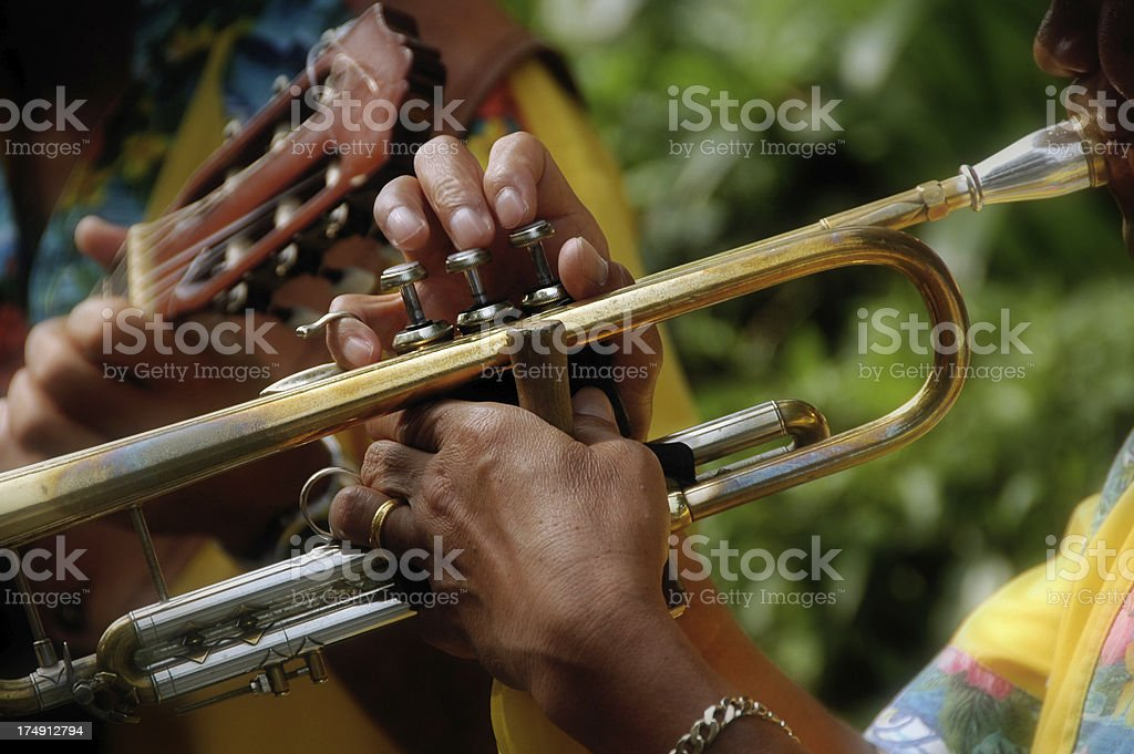 Latin Trumpeter royalty-free stock photo