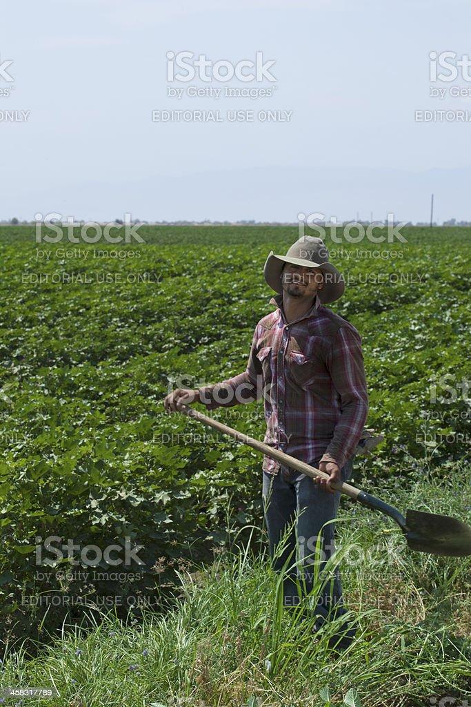 Latino Farm Worker In Fields stock photo