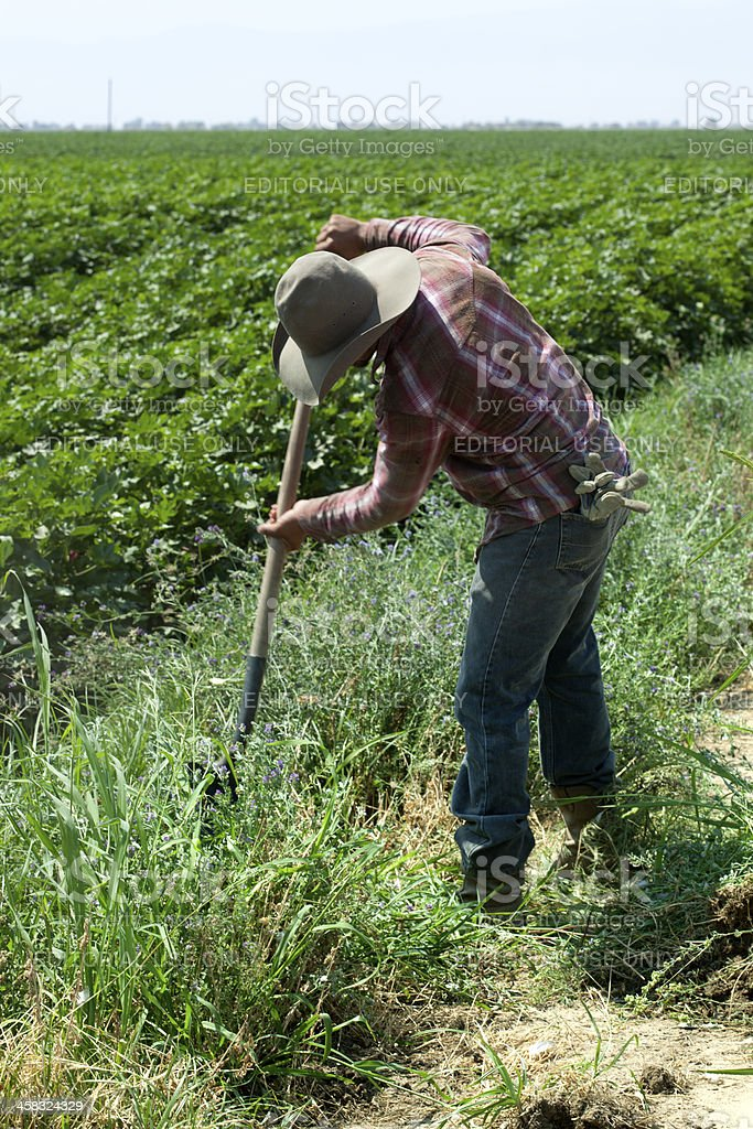 Latino Farm Worker In Fields stock photo