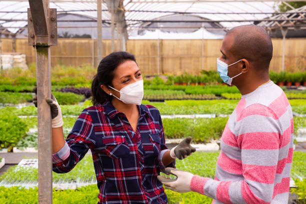 Latino farmers in protective medical masks talk in between work stock photo