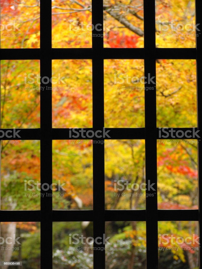 Lattice window and leaves foto stock royalty-free