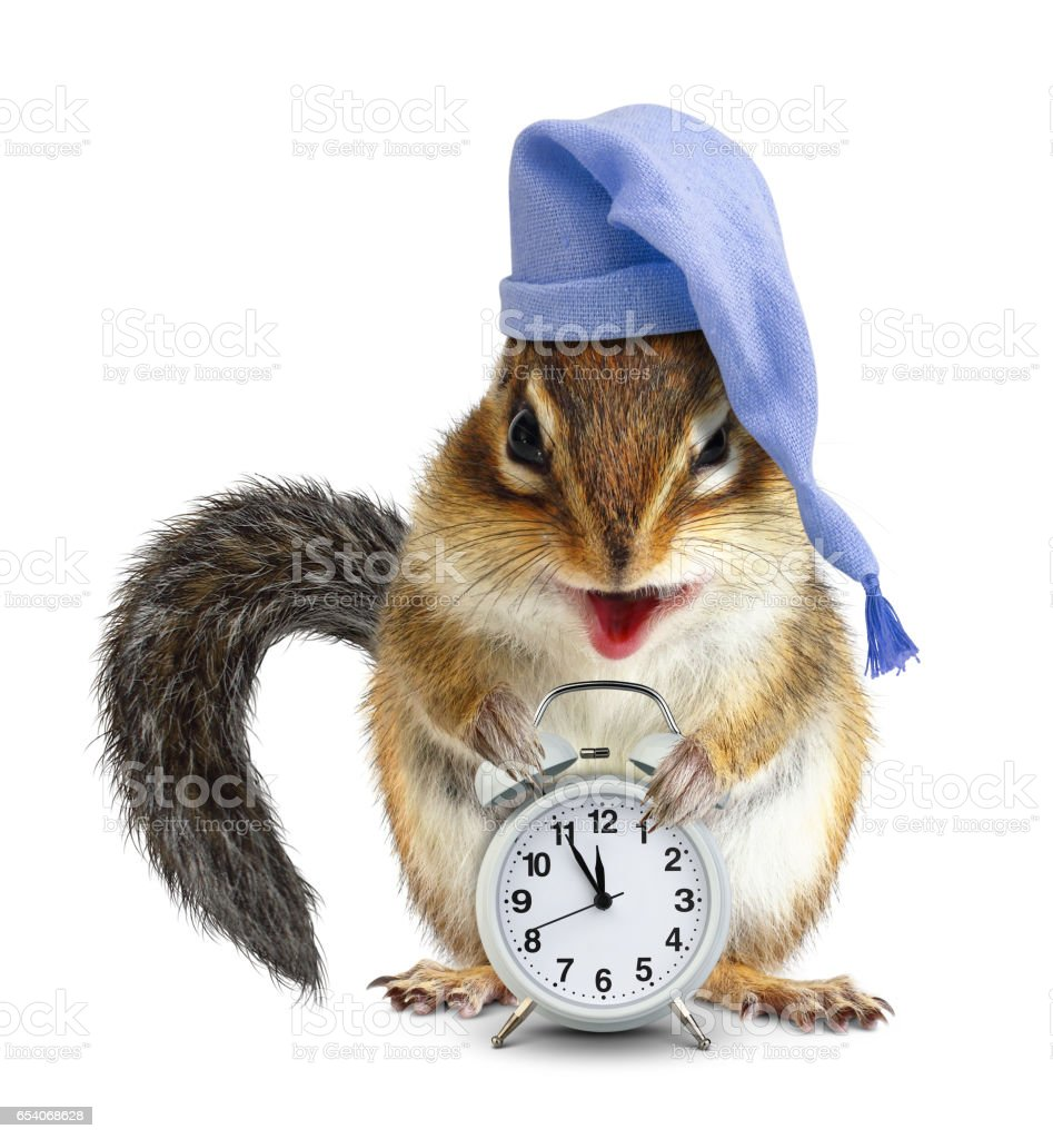 laughable animal chipmunk with clock and sleeping cap stock photo