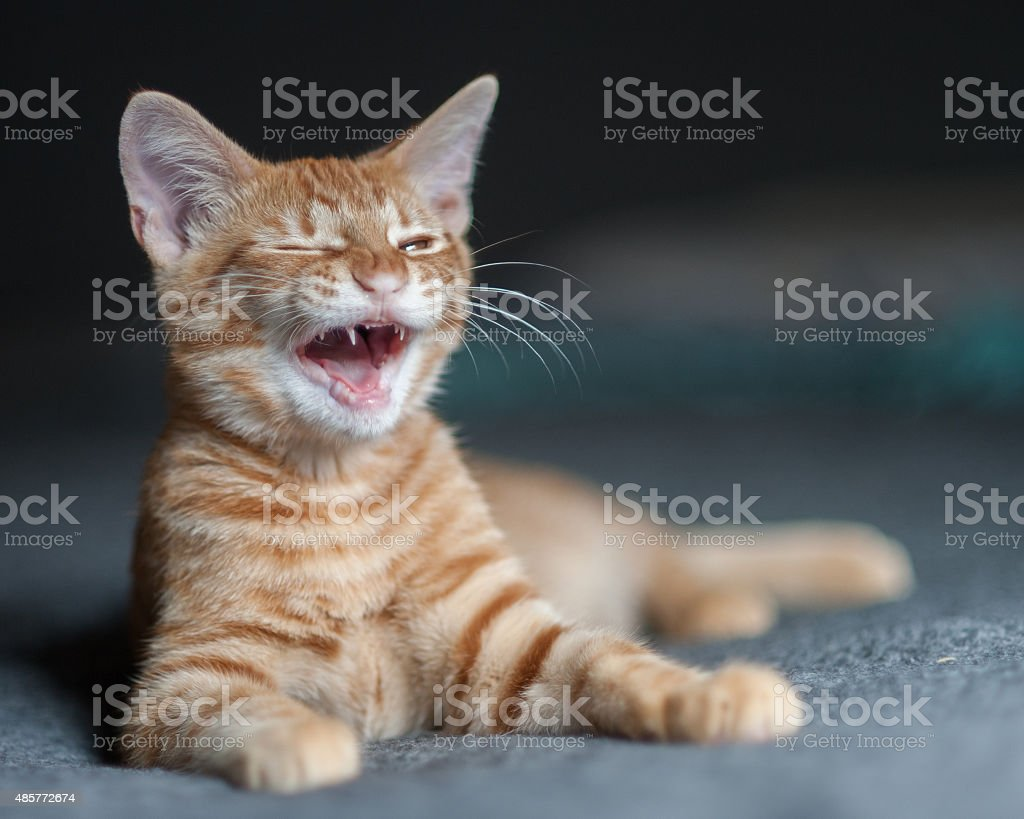 Laughing at a funny joke stock photo