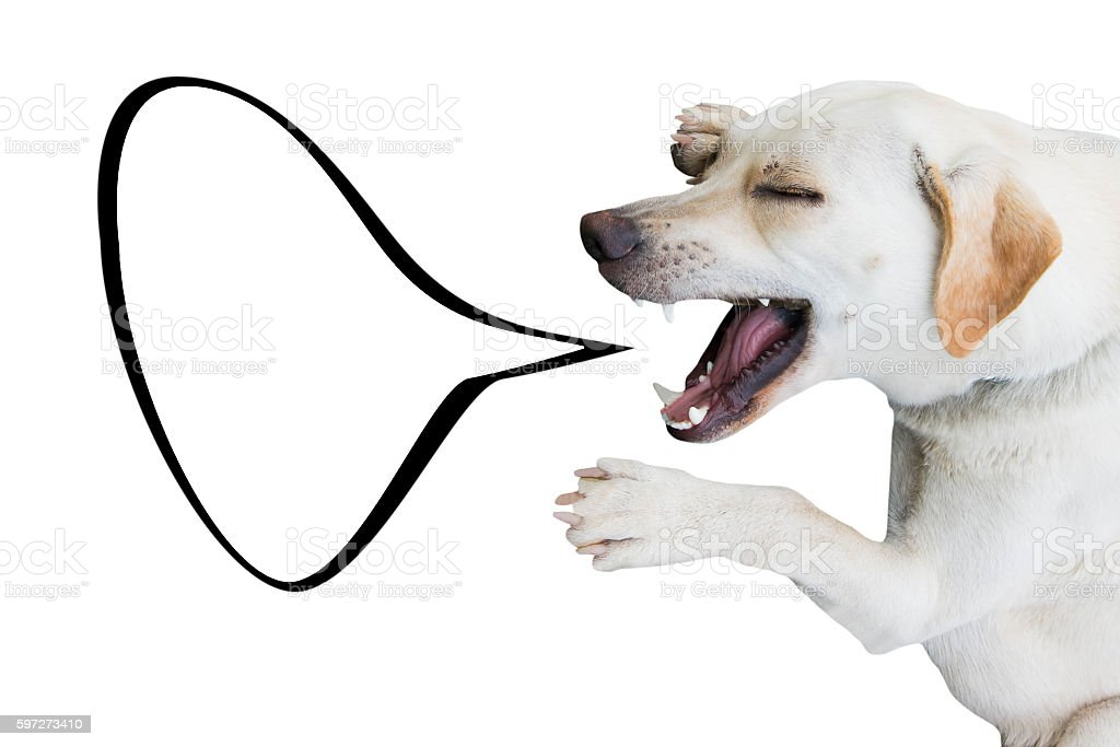 laughing dog isolated on white background with talking bubble photo libre de droits