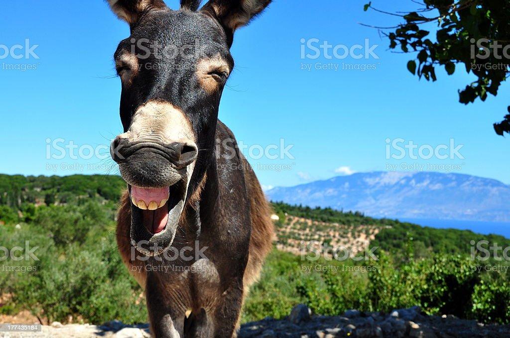 Lachen Esel in Griechenland – Foto