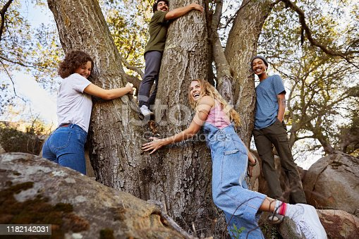 Laughing group of diverse young friends hugging a large tree while enjoying a sunny day walk together in the forest