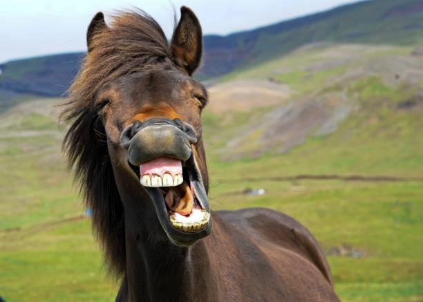 Laughing horse picture id1160791767?b=1&k=6&m=1160791767&s=612x612&w=0&h=mm2phzfuyqttl6rmdpkgguneudb46zlpsmpz77veu g=