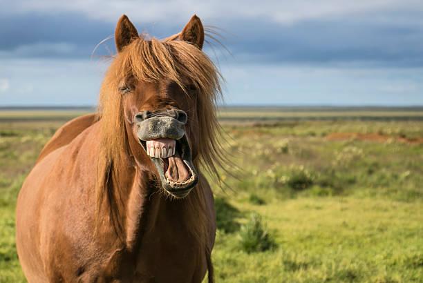 Laughing horse picture id599966138?b=1&k=6&m=599966138&s=612x612&w=0&h=hzwmg3vfe96gnac3pspdl etzmfmxrvkefzafglplqs=