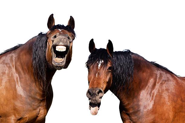 Laughing horses picture id475210088?b=1&k=6&m=475210088&s=612x612&w=0&h=vgifew9yvwsrdqo6ykwrcc5elfiy jk6ug pj9gqr34=