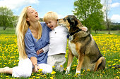 A happy young mother is sitting in a meadow of Dandelion Flowers with her little Child and her German Shepherd dog.