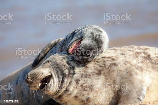 Laughing out loud funny animal meme image animals having fun picture id1088379176?b=1&k=6&m=1088379176&s=612x612&h=swxkkb3kgbnrhlj plrq1fc ubmar7yq1sukyhk8d2k=