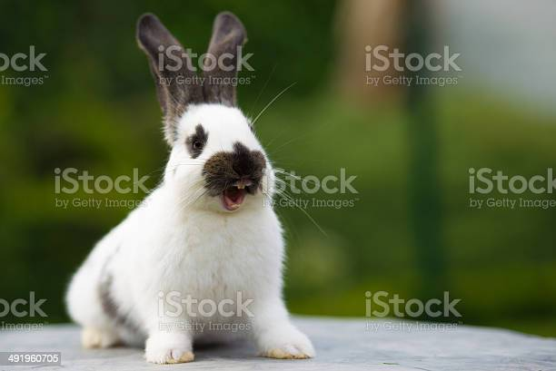 Laughing rabbit picture id491960705?b=1&k=6&m=491960705&s=612x612&h=pepbuclvikqhpms9bvqvkfd7fopczmrf7ocgkwr gak=
