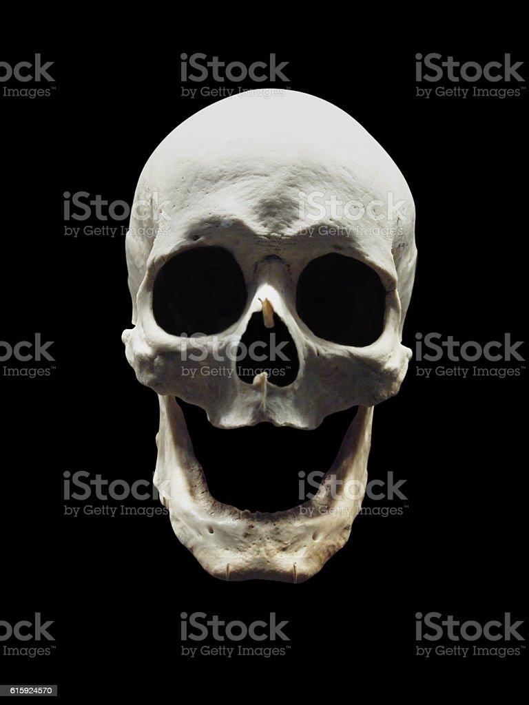 Laughing skull stock photo