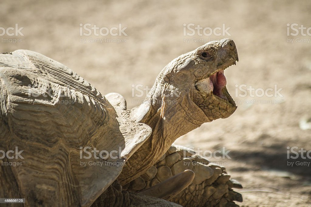 Laughing Turtle stock photo