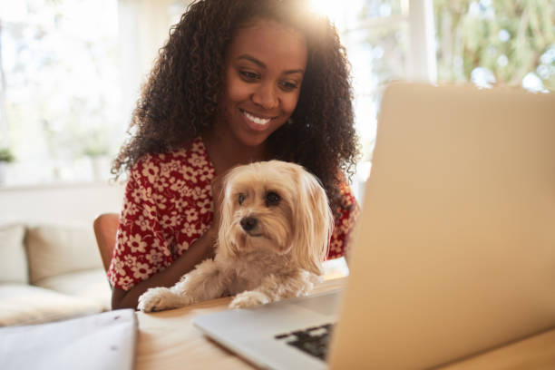 Laughing woman sitting with her dog and working on a laptop stock photo