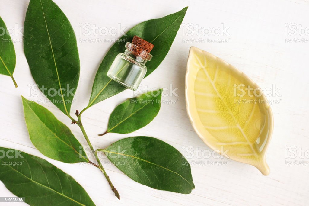 Laurel bay oil in bottle and ceramic plate with fresh green aroma leaves - Foto stock royalty-free di Affari finanza e industria