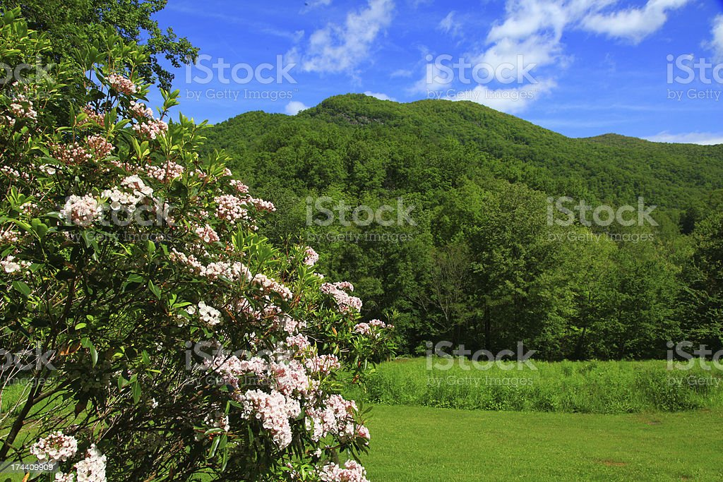Laurel in the Mountains royalty-free stock photo