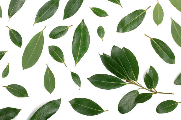 laurel isolated on white background. Fresh bay leaves. Top view. Flat lay pattern stock photo