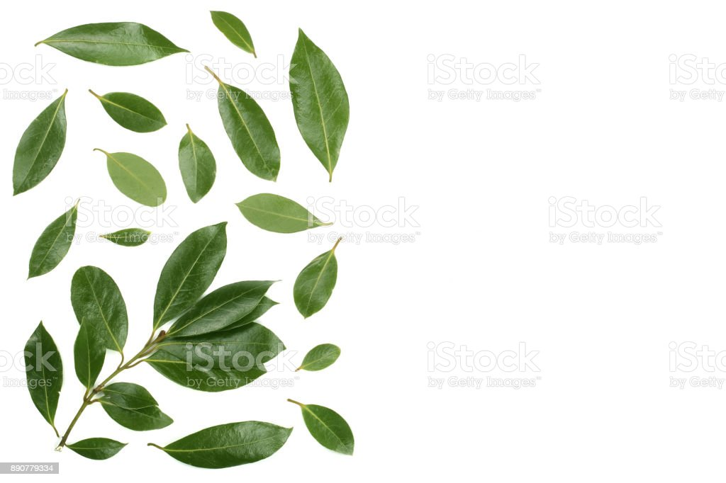 laurel isolated on white background with copy space for your text. Fresh bay leaves. Top view. Flat lay pattern stock photo