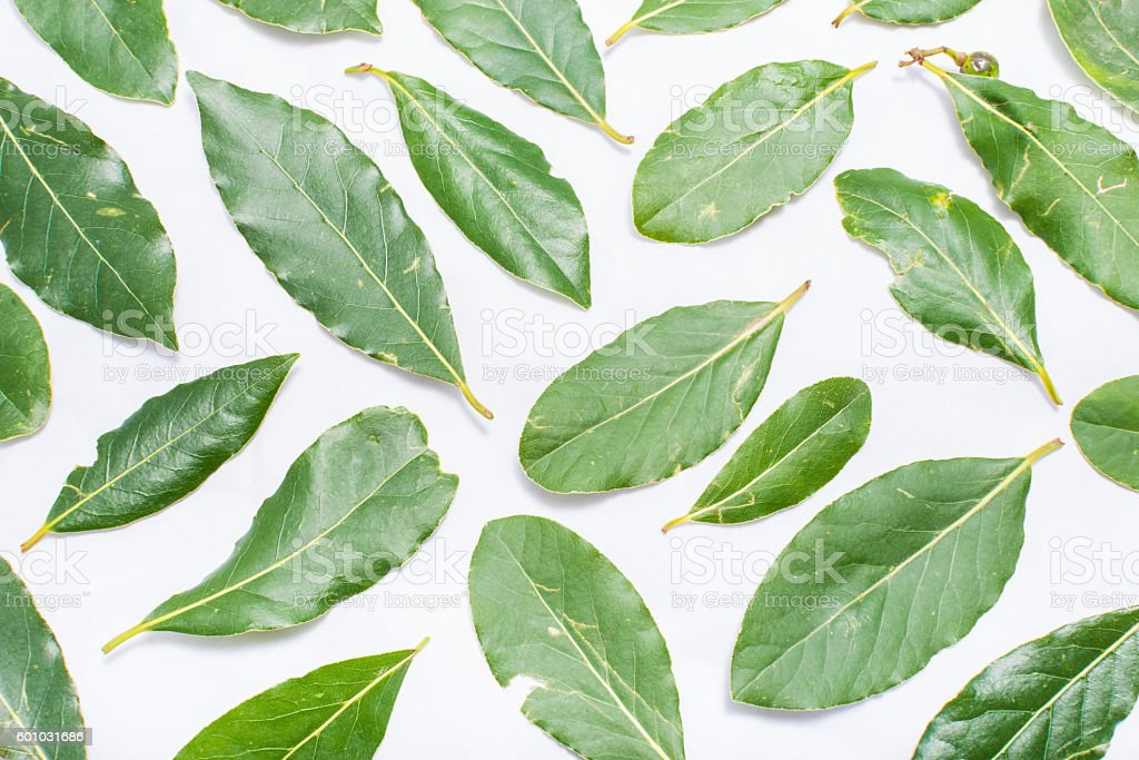 Laurel leaves on a white background stock photo